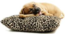 Dog daycare Sarasota bedding